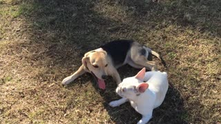 Doggy best friends reunite after months apart