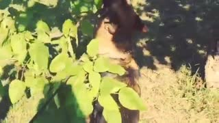 Dog is Stuck with Branch of the Tree - Video