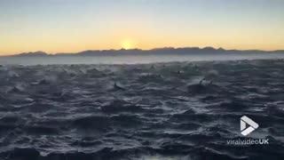 Watch A Super-Pod Of 2000 Dolphins Breach In This Mesmerizing Video