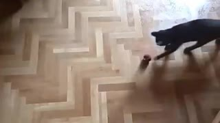 Young kitty playing on a wet floor - Video
