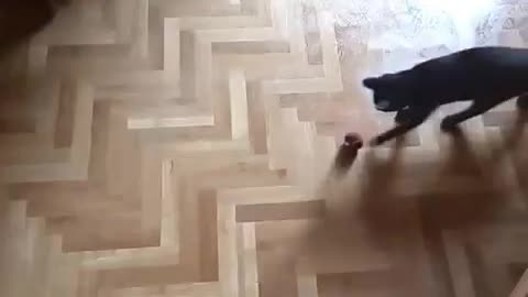 Young kitty playing on a wet floor