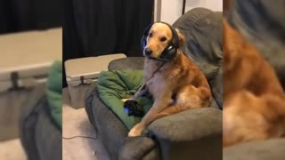 Cute Dog Caught Playing Fortnite On Playstation 4 - Video