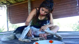 Funny Dogs Video , Amazing girl playing with dog,Dog very lucky then me - Video