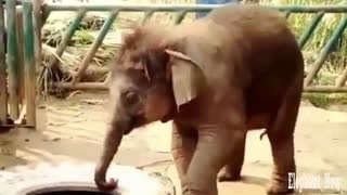 An Elephant Small lifts car Tire