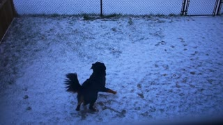 Recent snowfall sends dog into euphoric dance