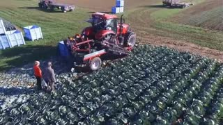 new modern agriculture equipment, automatic cabage harvest machine, amazing agriculture technology - Video
