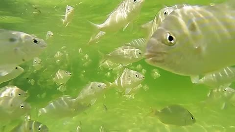 Underwater view of fish in Florida