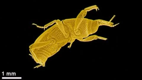 3D x-rays reveal insects' inner secrets