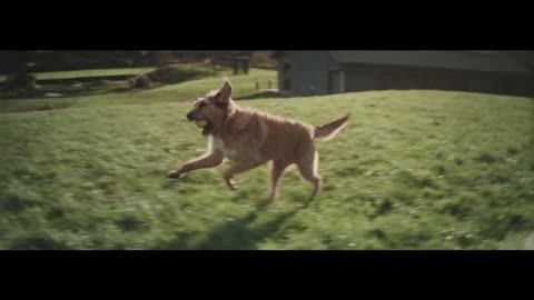Be Prepared! This Striking Commercial About A Dog Waiting For His Human Will Get You Crying…