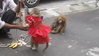 Monkey Dance India with cute baby  - Video
