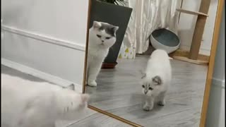 When a cat sees itself in a mirror, it becomes silly.