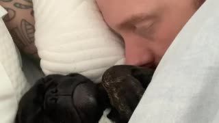 Sleeping Frenchie puppy is an extremely loud snorer