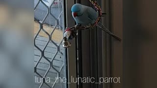 Bouncing Parrot  - Video