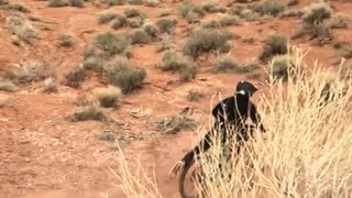 Guy does a jump on his bike in the desert and lands on his crotch