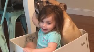 Singing Toddler Adorably Serenades Her English Bulldog - Video