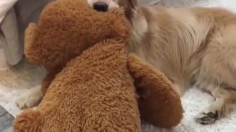 play grap the toy with clony dog