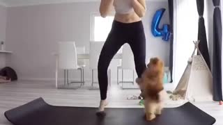 Brown dog clings to black pants woman doing yoga - Video