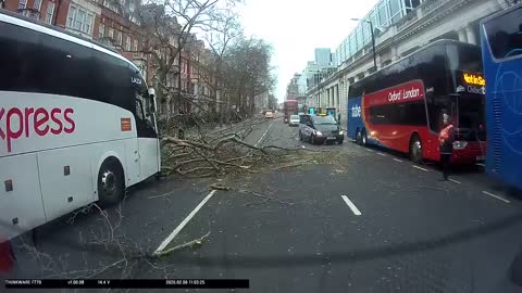 Dash cam captures the moment of tree falling onto vehicle