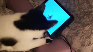 Cat learns to hunt spiders on tablet game