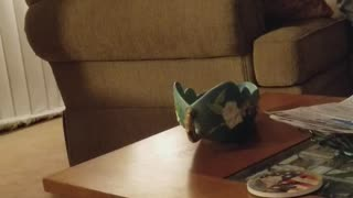 Cat Takes Down Window Dressing - Video
