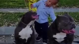 Little boy sticks tongue out with dogs
