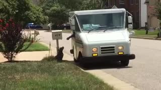 Dog and mail carrier strike up special friendship - Video
