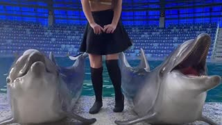Dolphins dancing with a girl