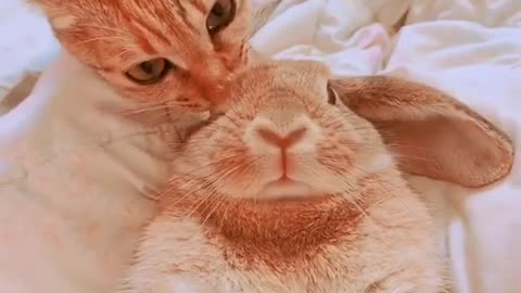 Kitty Cleans Bunny Buddy