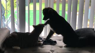 Puppy pets cat on the head with her paw