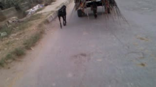 A dog is running behind the cart