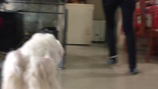 "A dogs perspective... ""please pay attention to me!""  - Video"