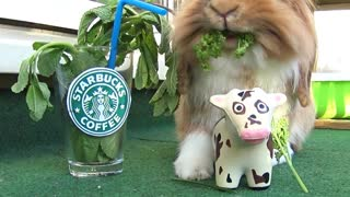 Bunny enjoys everything Starbucks has to offer - Video