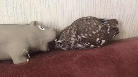 Owl and hippo