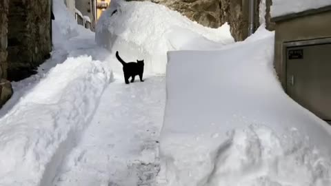 Winter-loving kitty plays in the deep snow