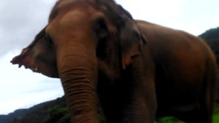 Elephant Highlands, Ban Lao Thailand, elephants being elephants  - Video