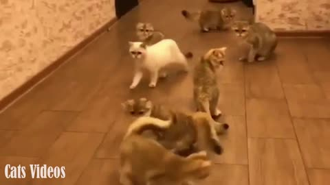 9 Cats Run Behind The Laser point At home In A comedy
