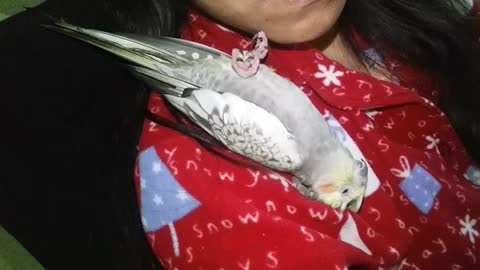 Sleepy cockatiel on my shoulder