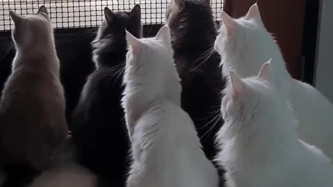 Cats whenever its delivery day