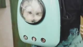 Also mood white dog in blue dog back pack - Video