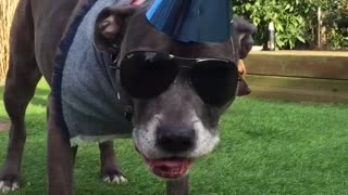 Birthday dog  - Video