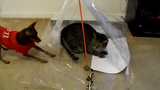Dog attempts to defeat trapped cat - Video