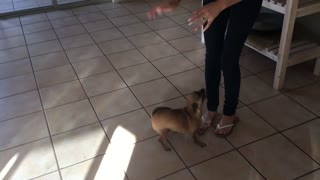 Dog does happy dance when mom arrives home - Video