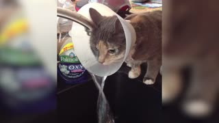 Cat Turns Cone Of Shame Into A Water Fountain - Video