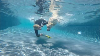 Labrador Retriever Keeper dives underwater with Mermaid Jana for her toypedo dog toy - Video