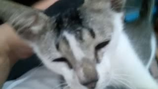 Kitten cuddles on chest and then farts - Video