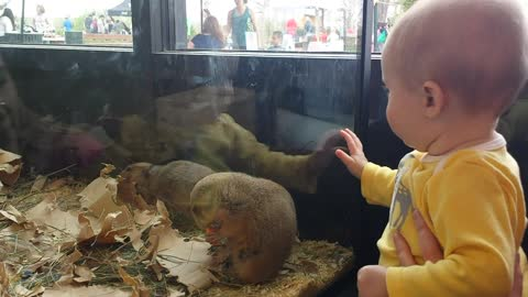 Prairie dog attempts to befriend baby