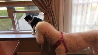 Cat Versus Dog - Video