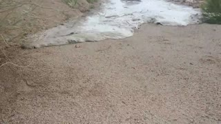 Flash Flood in Arizona - Video