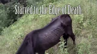 Couple finds old horse left to die on mountaintop, heroically rescues him - Video