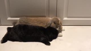 Bunny grooming  - Video